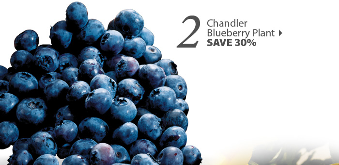 Chandler 