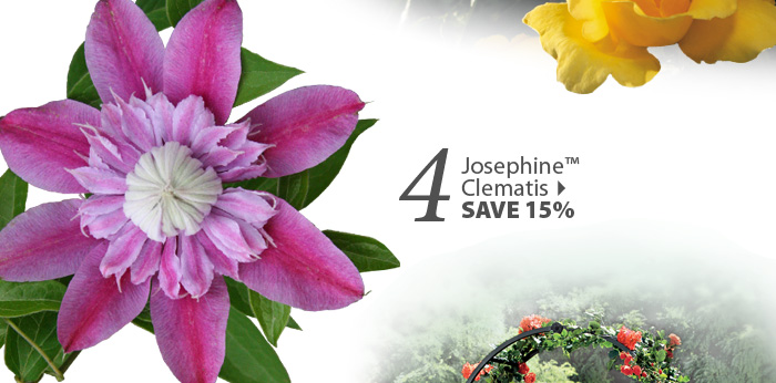 Josephine™ 
