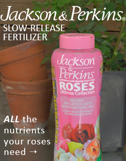 Jackson & Perkins® Rose Fertilizer