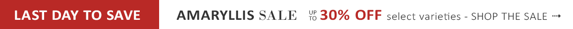 AMARYLLIS SALE up to 30% OFF for a limited time - SHOP NOW