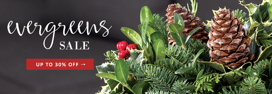 EVERGREENS up to 30% OFF -- SHOP NOW