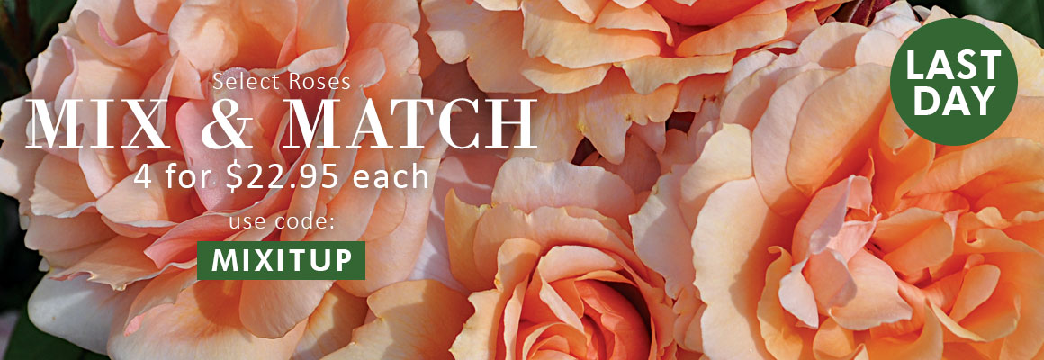 MIX AND MATCH - Select Roses 4 for $22.95 each use code: MIXITUP