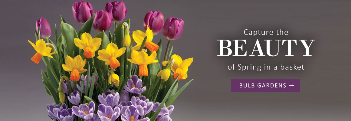 Capture the BEAUTY of Spring in a basket - SHOP BULB GARDENS