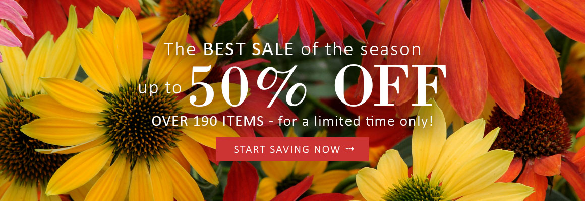 OVER 190 ITEMS up to 50% OFF for a limited time - SAVE NOW
