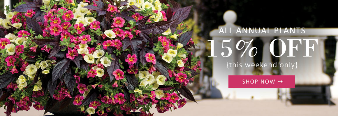 ALL ANNUAL PLANTS 15% OFF - this weekend only