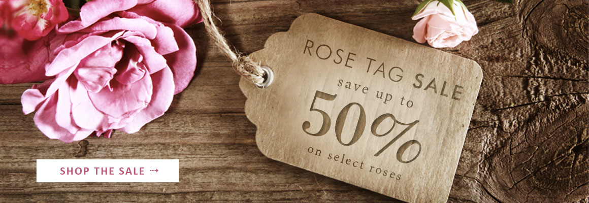 ROSE TAG SALE Save up to 50% on select roses - SHOP NOW