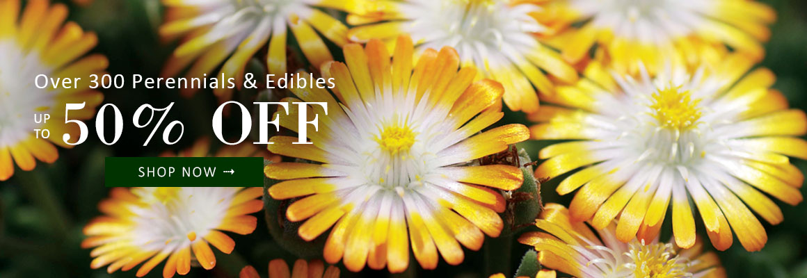 Over 300 Perennials and Edibles up to 50% OFF - SHOP NOW