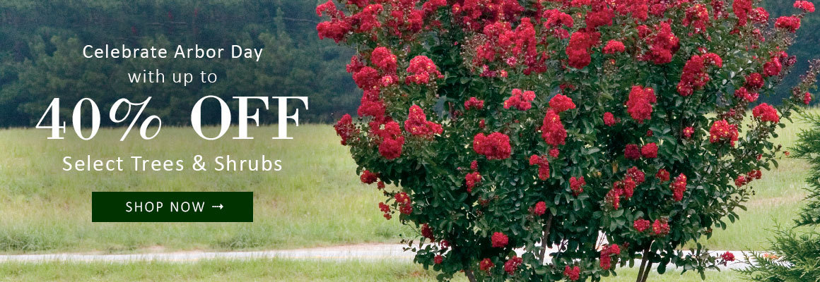 ARBOR DAY SALE up to 40% OFF Select Trees & Shrubs - SAVE NOW