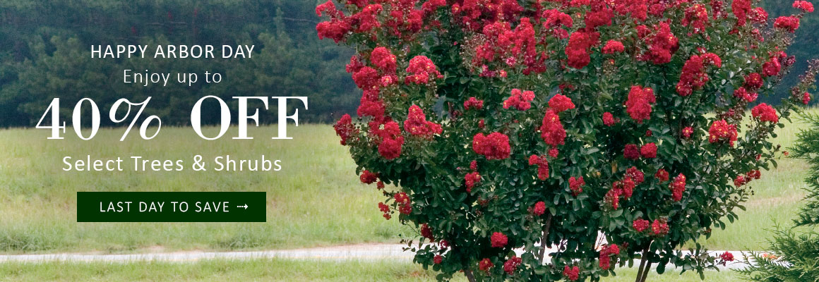 LAST DAY | ARBOR DAY SALE up to 40% OFF Select Trees & Shrubs - SAVE NOW