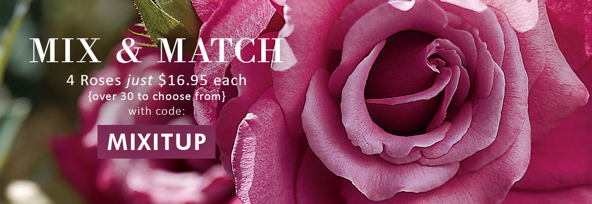 MIX AND MATCH 4 Roses for just $16.95 each -over 30 to choose from- use code: MIXITUP
