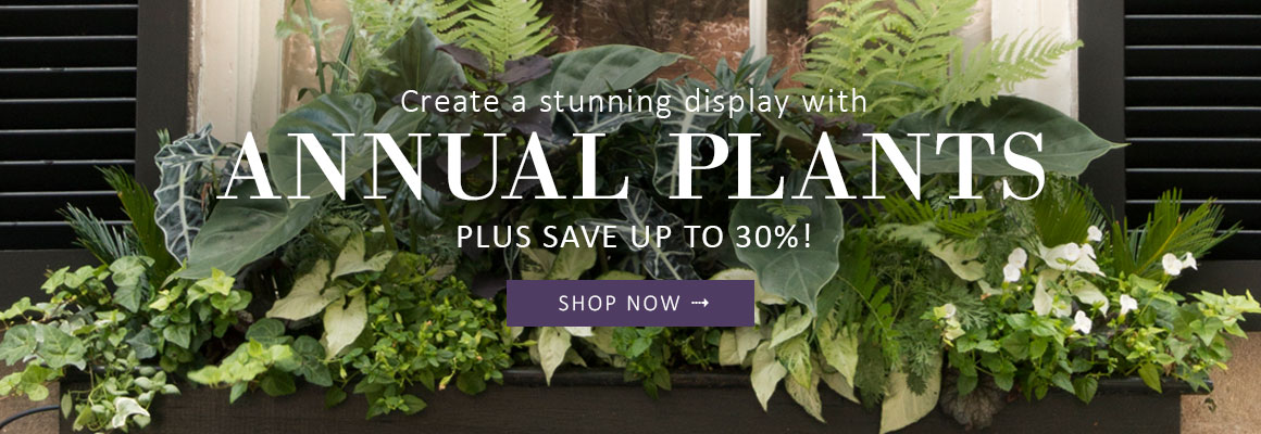 ANNUAL PLANTS up to 30% OFF - SHOP NOW