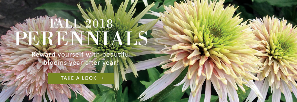 FALL 2018 PERENNIALS - TAKE A LOOK