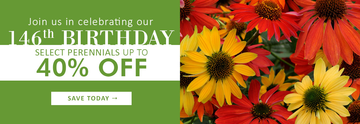 146th Birthday Celebration - SELECT PERENNIALS UP TO 40% OFF - SAVE NOW