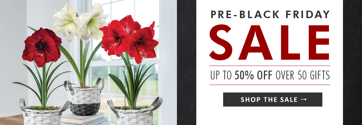 PRE-BLACK FRIDAY SALE up to 50% off over 50 gifts - SHOP NOW
