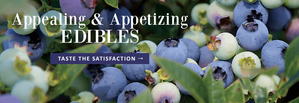 APPEALING AND APPETIZING EDIBLES - TASTE THE SATISFACTION