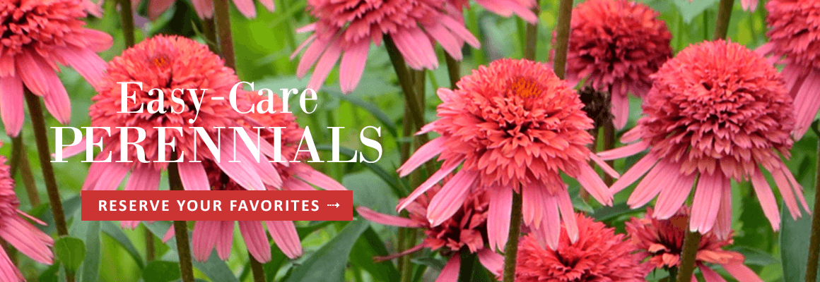 EASY-CARE PERENNIALS - RESERVE YOUR FAVORITES