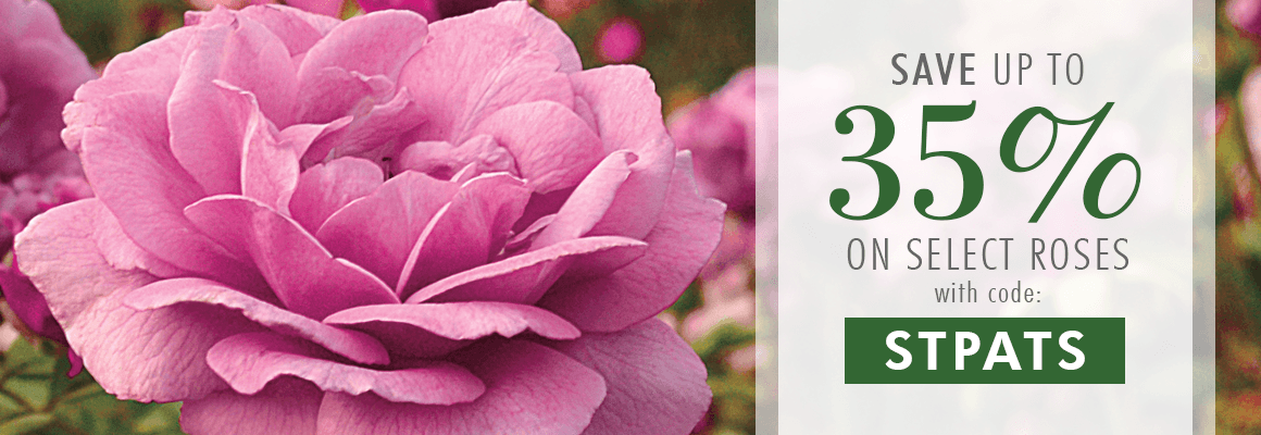 Select Roses up to 35% OFF with code: STPATS