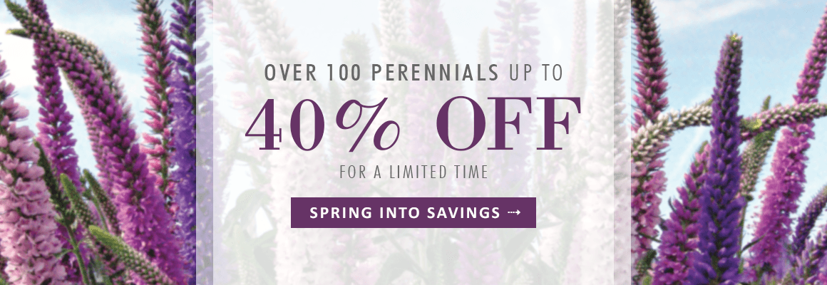 OVER 100 PERENNIALS UP TO 40% OFF for a limited time