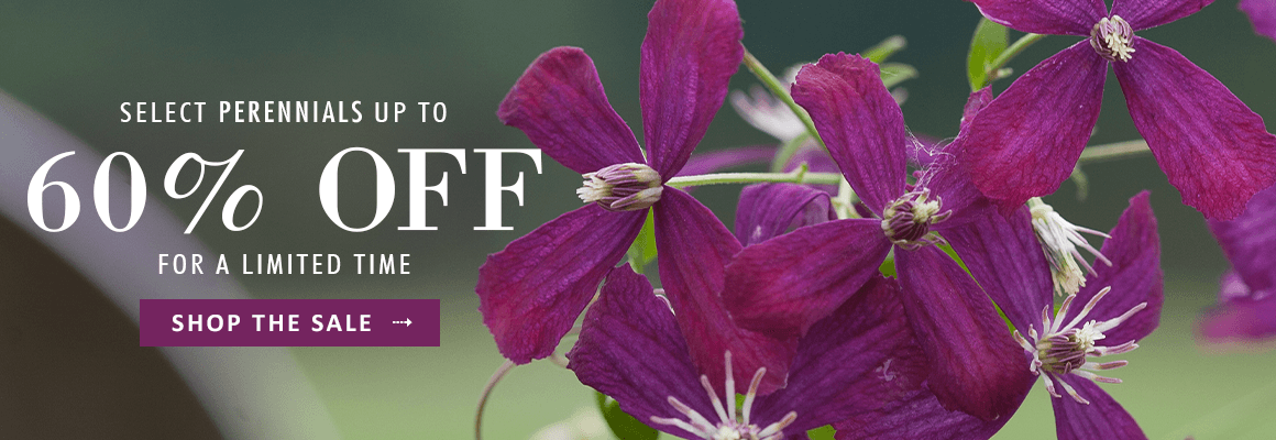 Select Perennials up to 60% OFF - SHOP THE SALE