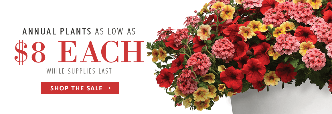 Annual Plants as low as $8 each while supplies last - SHOP NOW