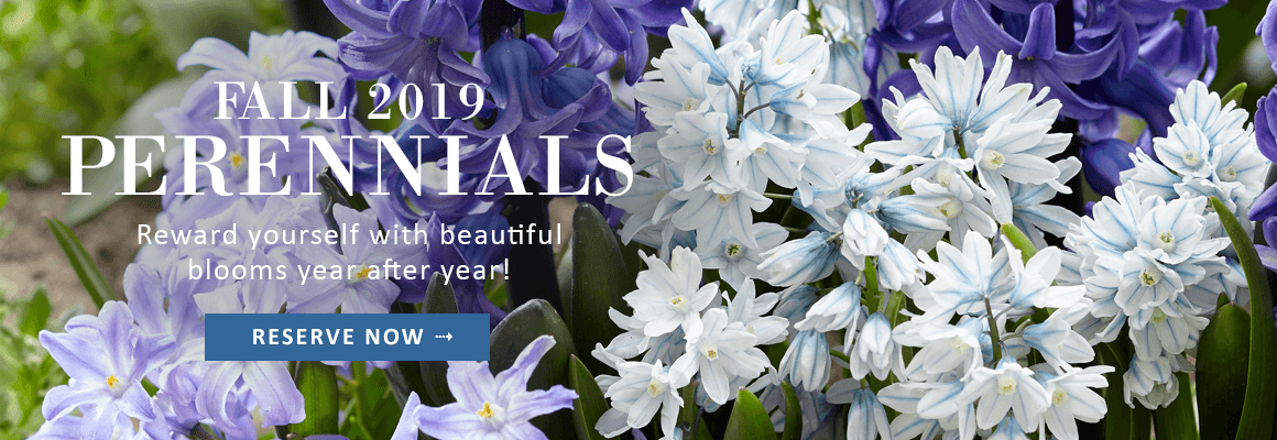 FALL 2019 PERENNIALS - RESERVE NOW