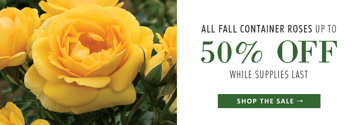 up to 50% OFF ALL FALL CONTAINER ROSES