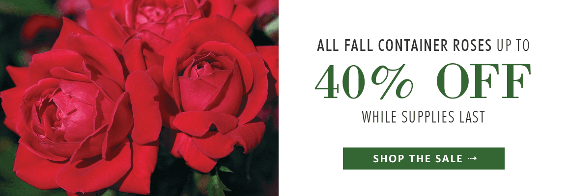 up to 40% OFF ALL FALL CONTAINER ROSES