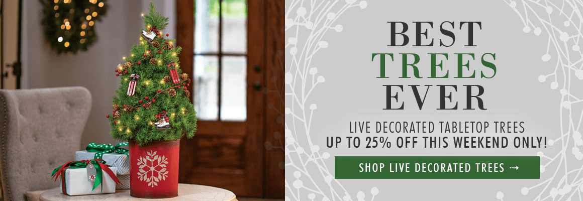 LIVE DECORATED TABLETOP TREES UP TO 25% OFF