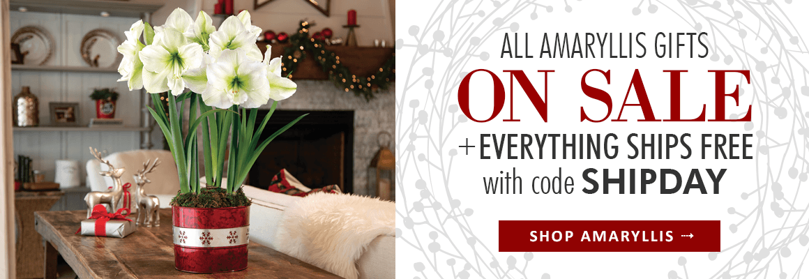 All Amaryllis Gifts on Sale + Everything Ships Free with code SHIPDAY