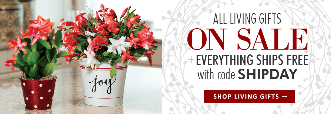 All Living Gifts on Sale + Everything Ships Free with code SHIPDAY