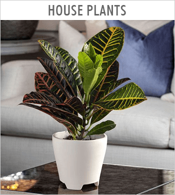 House Plants Image