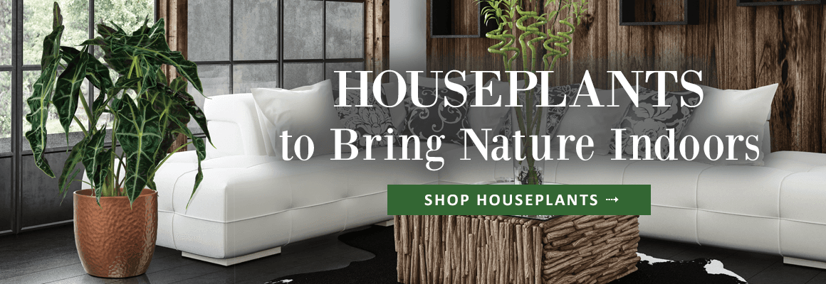 HOUSEPLANTS TO BRING NATURE INDOORS