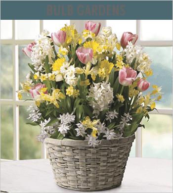 Bulb Gardens Image