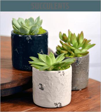 Succulent Image