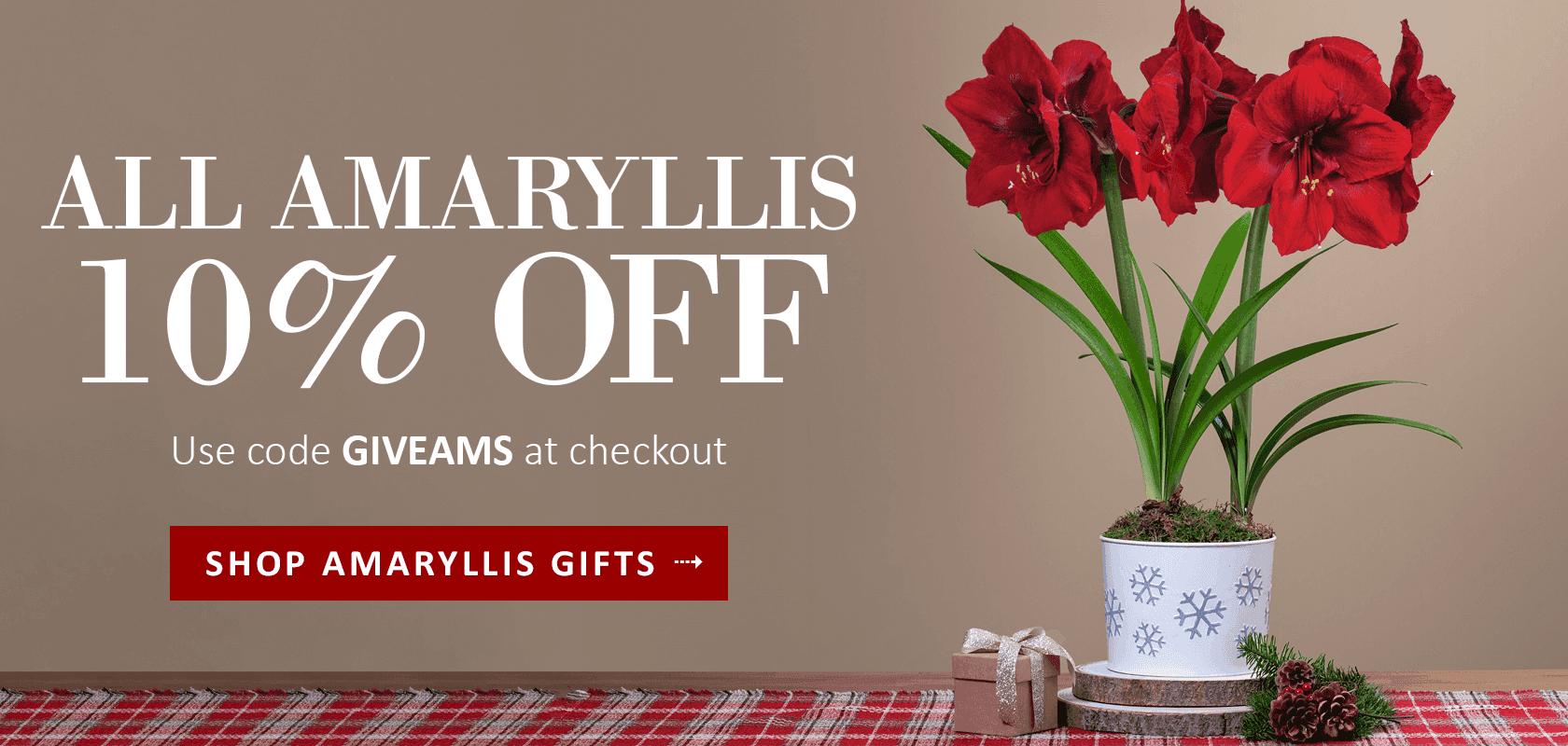 Amaryllis Sale