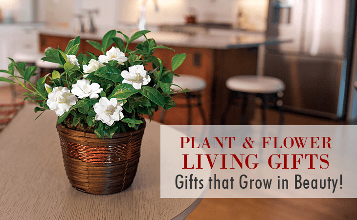 Plant and Flower Living Gifts: Gifts that Grow in Beauty!
