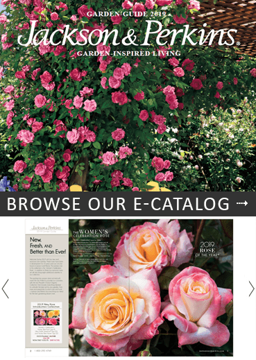 JP Free Catalog