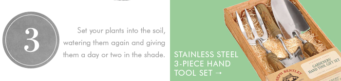 Set your plants into the soil, watering them again, and giving them a day or two in the shade.