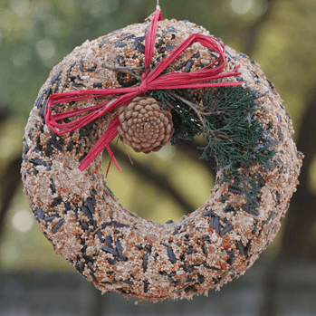 Birdseed Ornament Care Guide