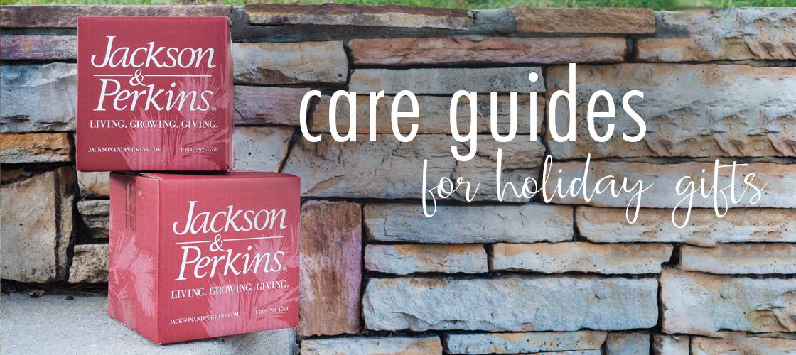 Care Guides Banner