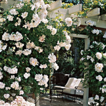 Tips to make your climbing rose impress and delight