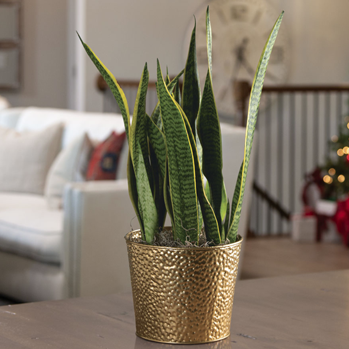 Gift Plant Care Guide