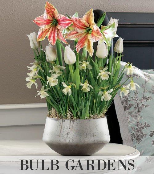 Indoor Bulb Gardens