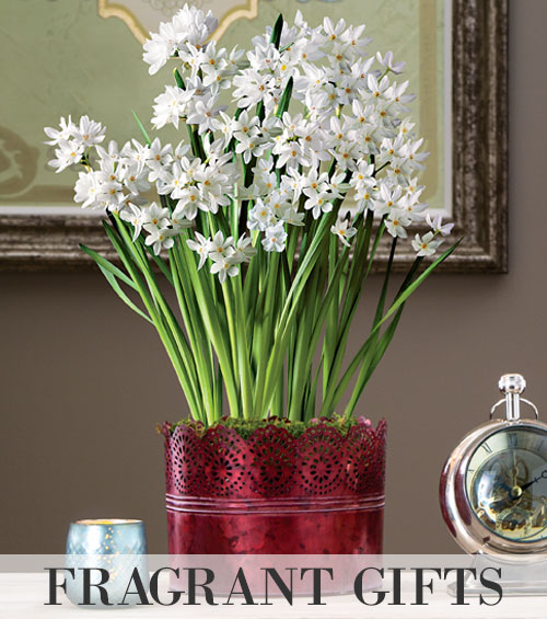 Fragrant Plant Gifts