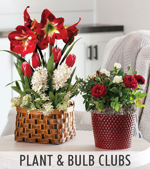 Plant and Bulb Clubs