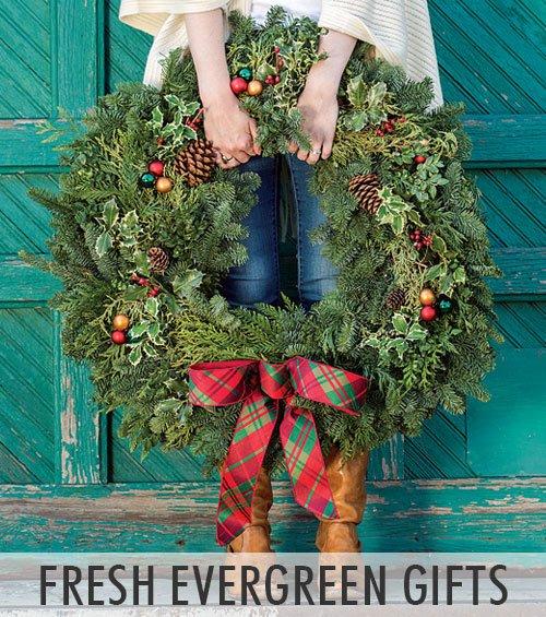 Fresh Evergreens