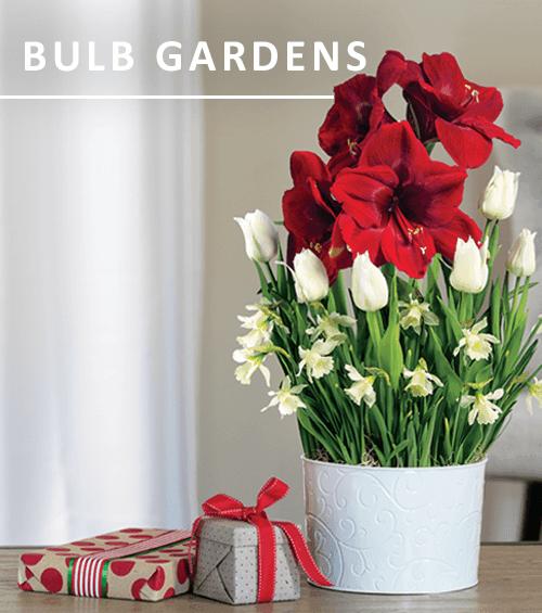Bulb Gardens