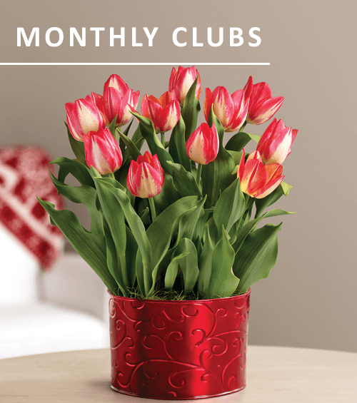 Monthly Clubs