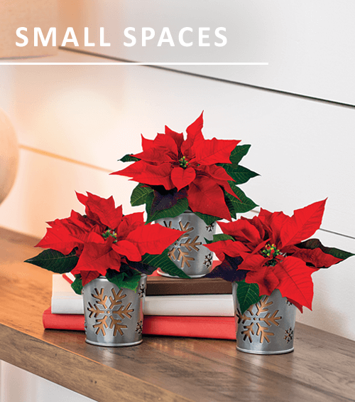 Gifts for Compact Spaces