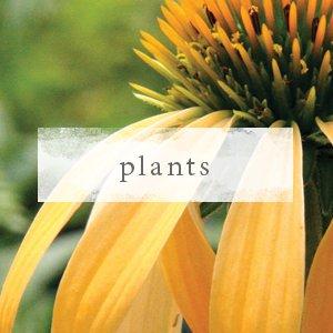 Shop Premium Plants